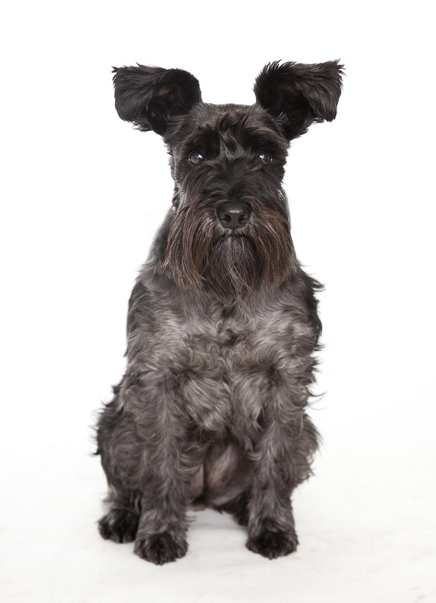 hundfoto täby